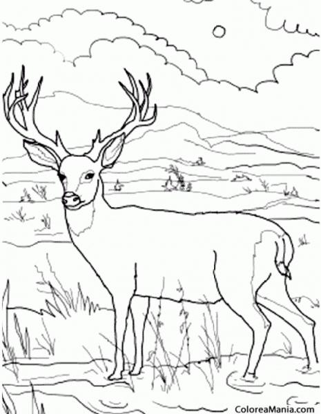 Colorear Ciervo En El Río (animales Del Bosque), Dibujo Para