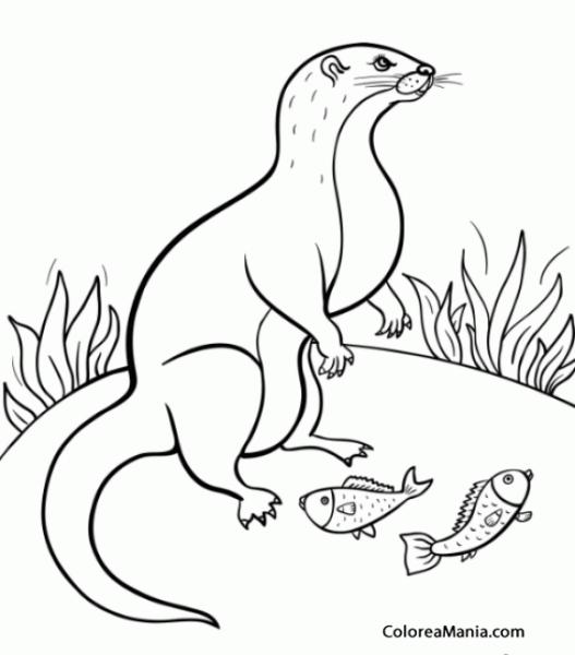 Colorear Comadreja Con Pescado (animales Del Bosque), Dibujo Para