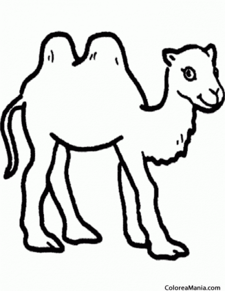 Colorear Camello  Camel  Silueta (animales Del Desierto), Dibujo
