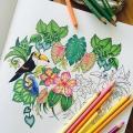 Toucan Para Colorear