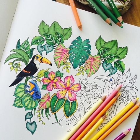 Magical Jungle Toucan