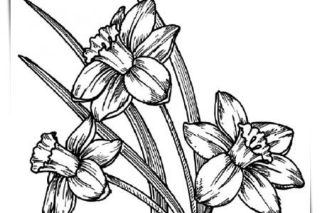 Juegos De Colorear Flores Y Rosas A4