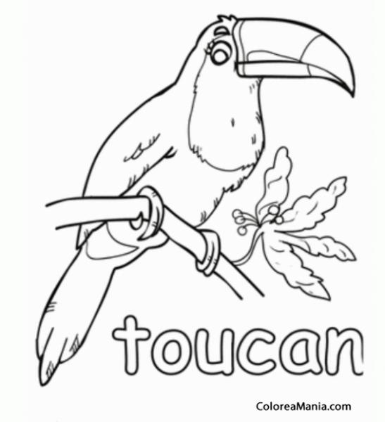 Colorear Tucán  Toucan  Tucano 2 (aves), Dibujo Para Colorear Gratis