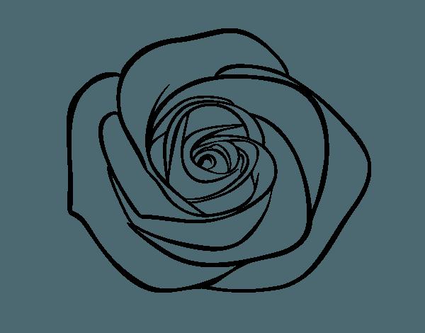 Dibujo De Flor De Rosa Para Colorear