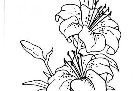 Dibujos Para Colorear Flores Bonitas A4