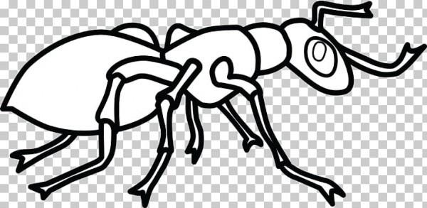 Libro Para Colorear Colonia De Hormigas Hey, Hormiga Pequeña