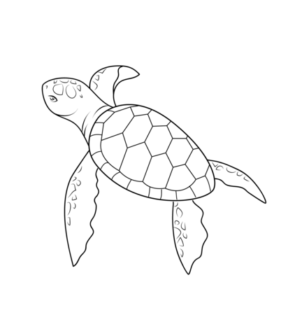 Baby Turtle Coloring Page From Turtles Category  Select From 20946