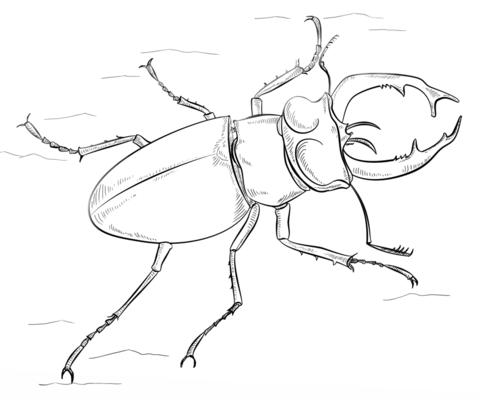 Western Black Stag Beetle Coloring Page