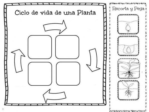 Imagenes Para Colorear Del Ciclo De Vida De Las Plantas