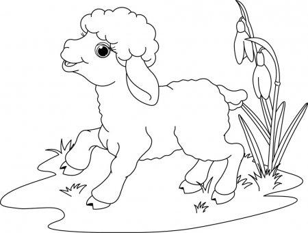 ᐈ Dibujos De Ovejas Imágenes De Stock, Dibujos Oveja Infantiles