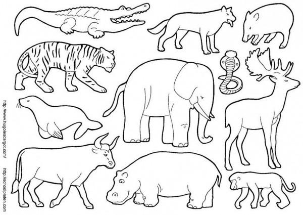 Imagenes Para Colorear De Animales Terrestres