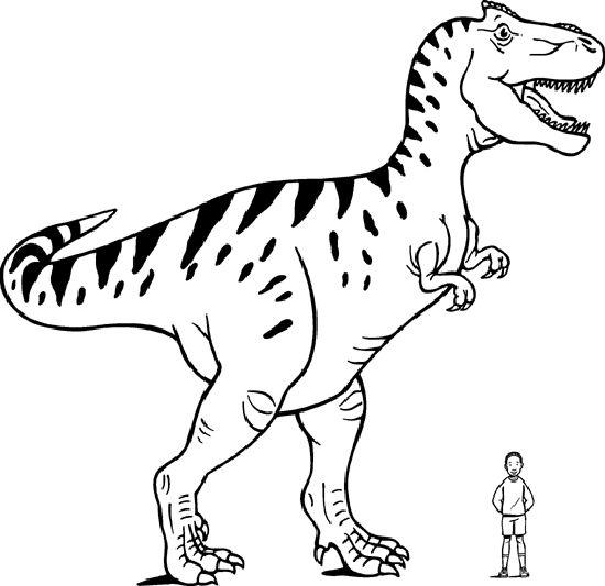 37 Imágenes De Dinosaurios  Infografías E Imágenes Para Consultar