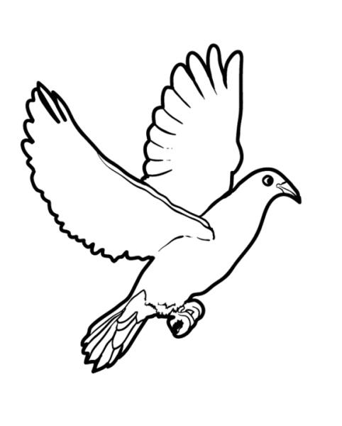 Paloma  81 (animales) – Páginas Para Colorear