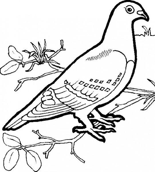 Paloma  85 (animales) – Páginas Para Colorear