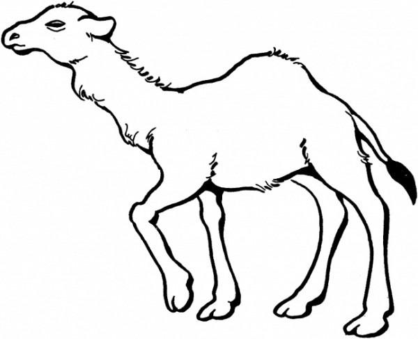 Animales Del Desierto Para Colorear 21952
