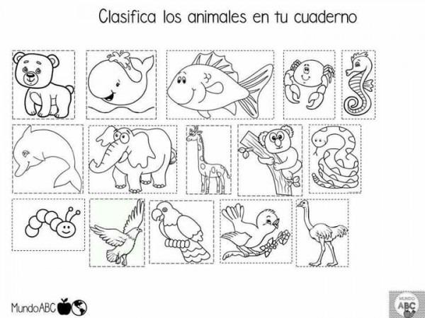 Pin De Isabel Salamanca En Ficha Animales