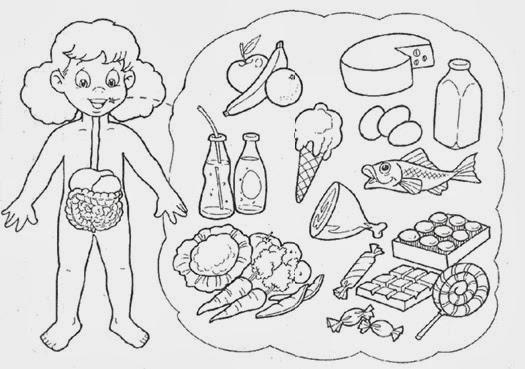 Dibujos Para Pintar De Sistema Digestivo Para NiÑos De Inicial