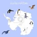 Animales De La Antartida Para Colorear
