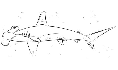 Dibujo De Tiburón Martillo Para Colorear