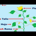 Partes De La Planta En Ingles Para Colorear