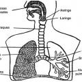 Imagenes Del Sistema Respiratorio Humano Para Colorear