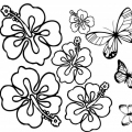 Dibujos De Flores Hawaianas Para Colorear