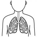 Pulmones Dibujo Para Colorear
