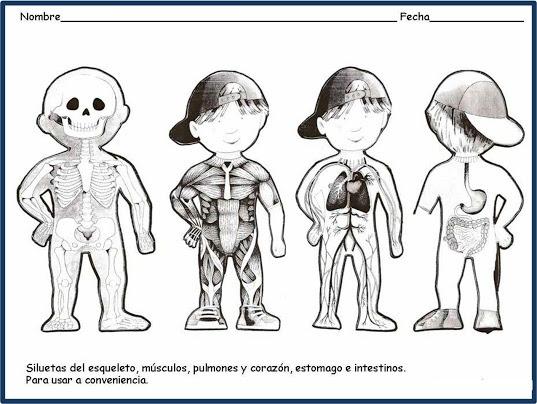 Silueta De Un Cuerpo Humano Para Colorear