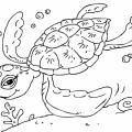 Imagenes De Tortugas Marinas Para Colorear