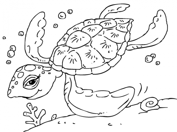 Dibujos Para Pintar Tortugas Marinas