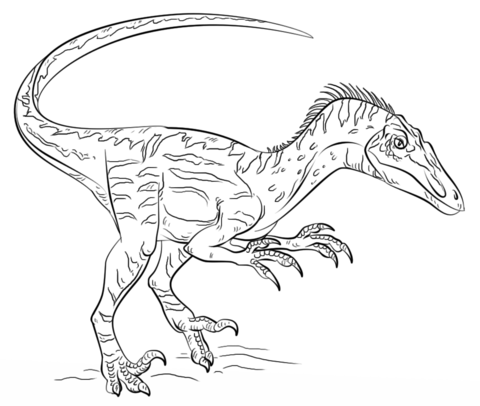Dibujo De Velociraptor Para Colorear